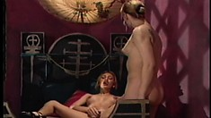 Sugary shemale with trimmed pubis gets caressed and titillated